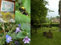 a picture of the churchyard along with a lichem, a bee, some wild flowers and the certificate for winning the Bishop's Prize for Nature in Churchyards